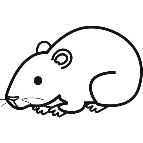 Coloriage hamster facile dessin gratuit imprimer - Hamster gratuit ...