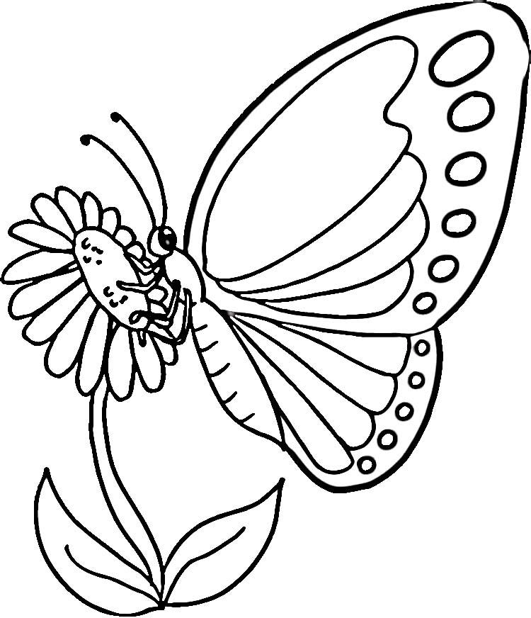 autres coloriages papillon - Papillon Dessin