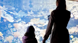 Ce que vous devez savoir sur l'Aquarium de Paris