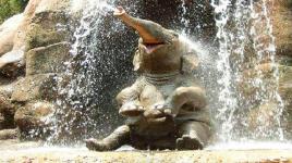 4 faits amusants sur les éléphants