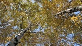 Faits que vous devriez apprendre sur les forêts