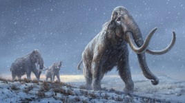 L'ADN le plus ancien du monde récupéré à partir de dents de mammouths sibériens vieilles de plusieurs millions d'années