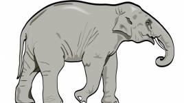 Que devrions-nous savoir sur les éléphants?