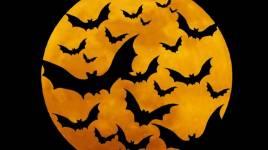 Halloween: pourquoi la chauve-souris est partout dans chaque décoration