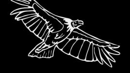 Comptine l'aigle noir