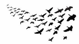 Pourquoi les animaux migrent-ils?