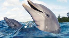 Nos enfants et la découverte des dauphins