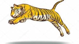 Tigres: Ce qu'il faut savoir sur ces beaux animaux