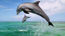 Pourquoi les dauphins mignons sont différents des autres animaux