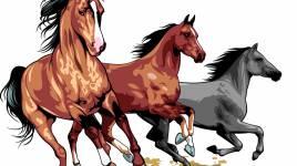 Animaux: Ce que vous devez savoir sur les chevaux!