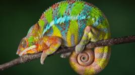 Ce que vous devez savoir sur le caméléon