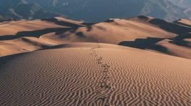 Que devraient savoir nos enfants sur le désert