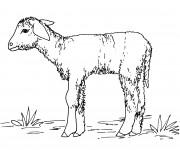 Coloriage dessin  Agneau 3
