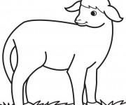 Coloriage et dessins gratuit Agneau dessin facile à imprimer