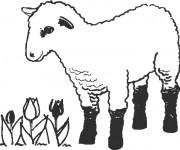 Coloriage et dessins gratuit Agneau en ligne à imprimer