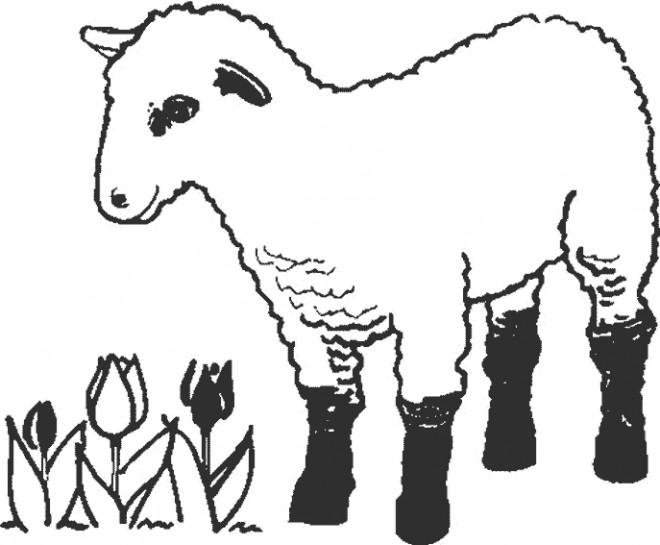Coloriage et dessins gratuits Agneau en ligne à imprimer