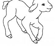 Coloriage et dessins gratuit Agneau pour enfant à imprimer