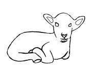 Coloriage Jeune agneau