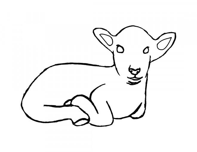 Coloriage et dessins gratuits Jeune agneau à imprimer