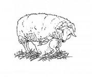 Coloriage et dessins gratuit Jeune agneau soigné par sa mère à imprimer