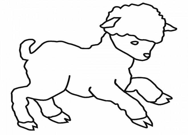 Coloriage et dessins gratuits Un petit agneau à imprimer