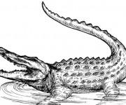 Coloriage dessin  Alligator 1