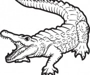 Coloriage dessin  Alligator 4