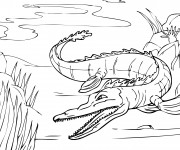 Coloriage et dessins gratuit Alligator dans la rivière à imprimer