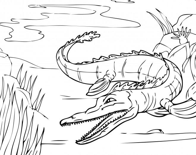 Coloriage et dessins gratuits Alligator dans la rivière à imprimer