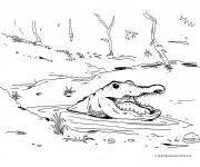 Coloriage Alligator dans la rivière