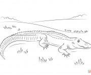 Coloriage Alligator en plein air
