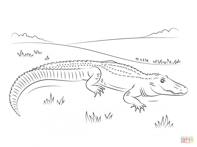 Coloriage et dessins gratuits Alligator en plein air à imprimer