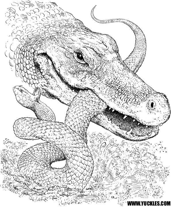 Coloriage et dessins gratuits Alligator et serpent en combat à imprimer