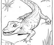 Coloriage Alligator premiers pas