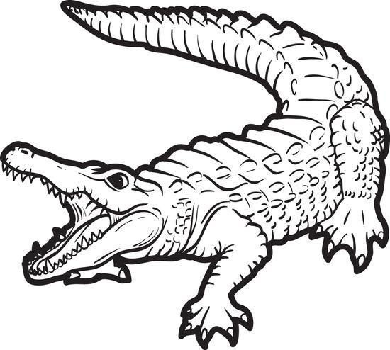 Coloriage Crocodile Dessin Gratuit A Imprimer