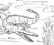 Coloriage Crocodile pas à pas