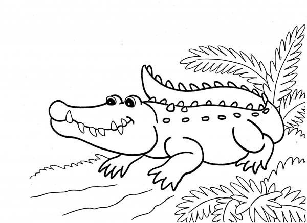 Coloriage Crocodile Qui Sourit Dessin Gratuit A Imprimer