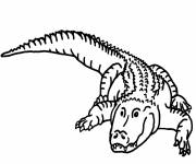 Coloriage et dessins gratuit crocodile simple à colorier à imprimer