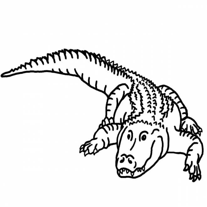Coloriage et dessins gratuits crocodile simple à colorier à imprimer