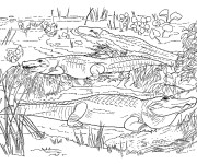 Coloriage et dessins gratuit Crocodiles dans la nature à imprimer