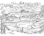 Coloriage Crocodiles dans la nature