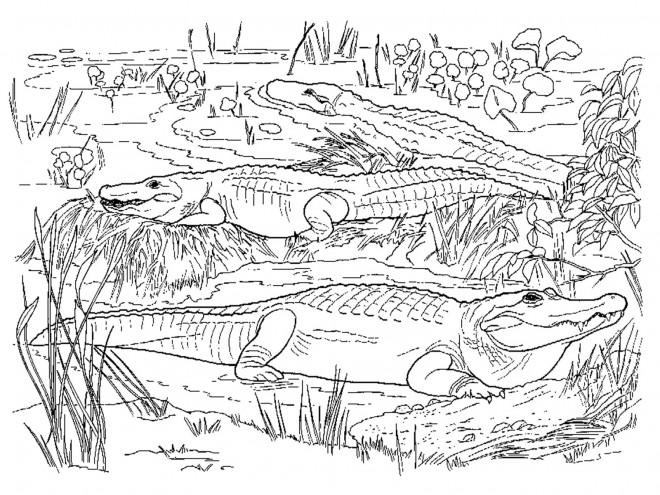 Coloriage et dessins gratuits Crocodiles dans la nature à imprimer