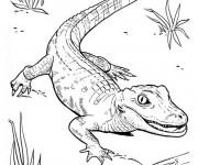Coloriage et dessins gratuit Petit Crocodile marche à imprimer