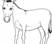 Coloriage et dessins gratuit Âne pour enfants à imprimer