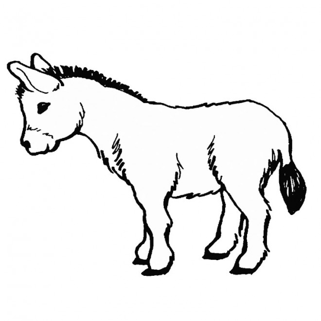 Coloriage et dessins gratuits Dessin d'un petit  âne à imprimer
