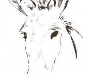 Coloriage et dessins gratuit tête d'âne à imprimer