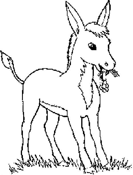 Coloriage et dessins gratuits Un petit âne porte une fleure à imprimer