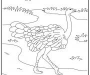 Coloriage dessin  Autruche 10