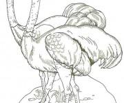 Coloriage dessin  Autruche 6