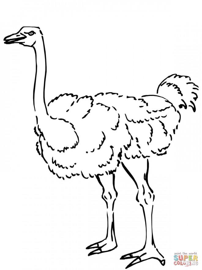 Coloriage et dessins gratuits Autruche animal à imprimer